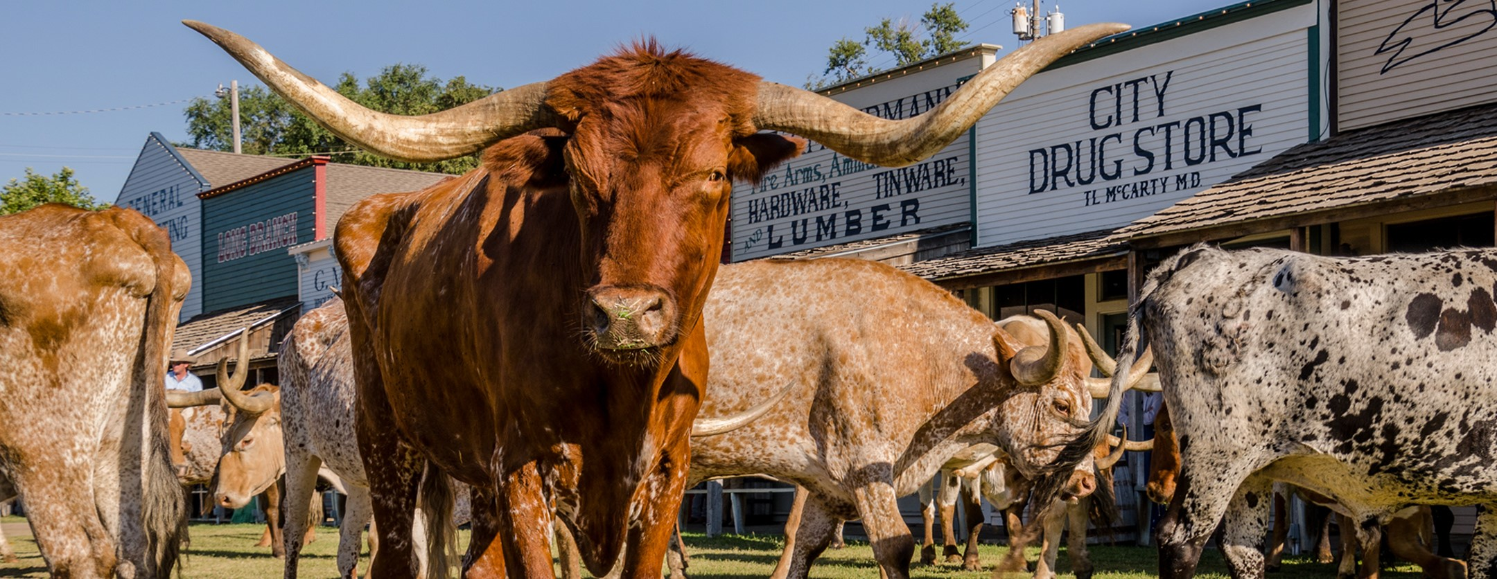 Boot Hill Museum - Longhorn Cattle Drive